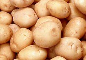 produksi kentang