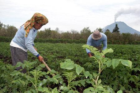 petani-taneh-karo