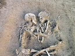 fosil_kerangka_manusia_purba